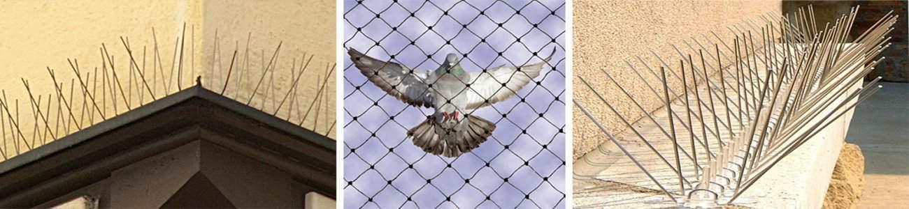 Ochrana proti ptactvu Olomouc